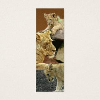 Leoa e marcador de Cubs mini/ Cartão De Visitas Mini
