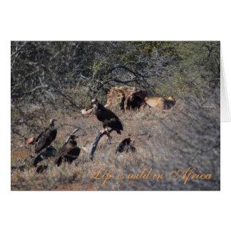 Leões africanos do safari, girafa, abutres cartão comemorativo