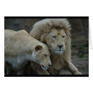 Leões brancos cartão comemorativo