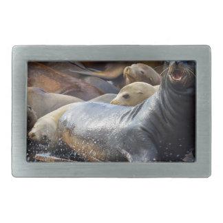 Leões de mar na doca de flutuação em San Francisco