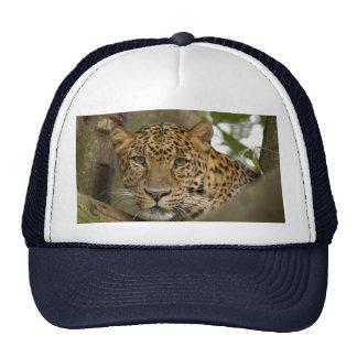 LeopardCheetaro002 Bonés