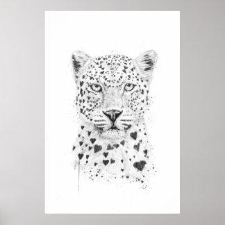 Leopardo bonito pôster