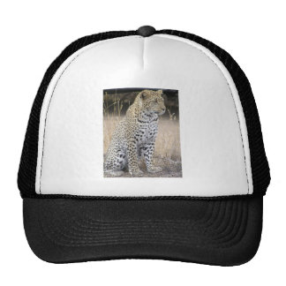 leopardo boné