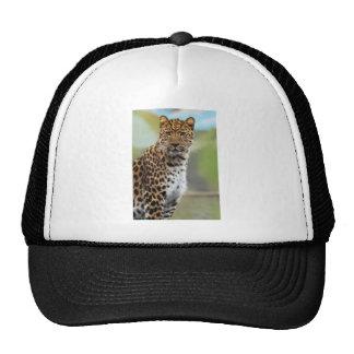 Leopardo Bone
