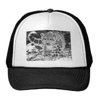 Leopardo de neve boné