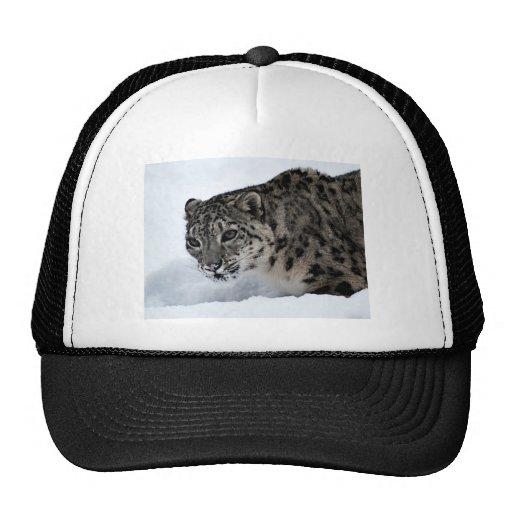 Leopardo de neve bone