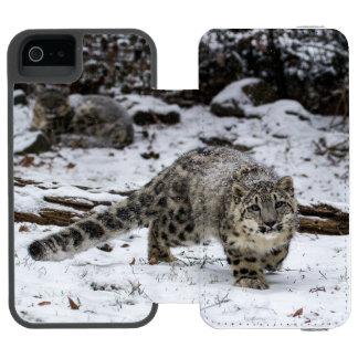 Leopardo de neve Cub