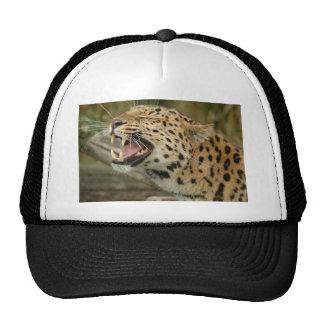 leopardo do amure boné
