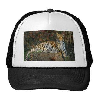 Leopardo do Savanna africano Boné