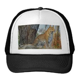 Leopardo no boné da bola do relógio