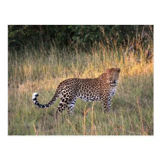 Leopardo no cartão do Savanna