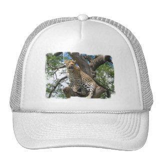Leopardo no chapéu de basebol da árvore boné