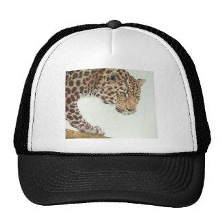 Leopardo novo bone