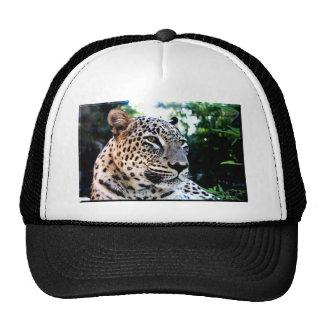 Leopardo persa raro boné