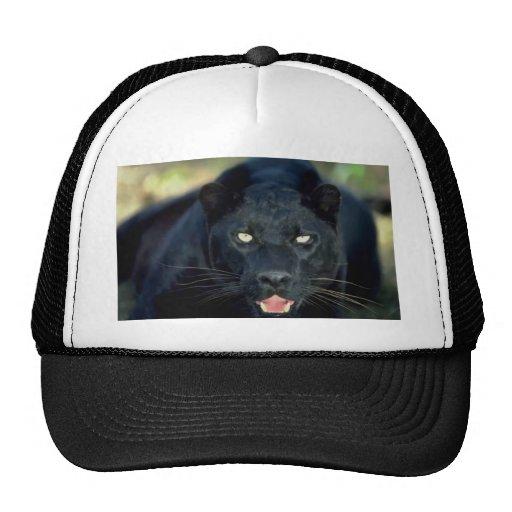 Leopardo preto bone