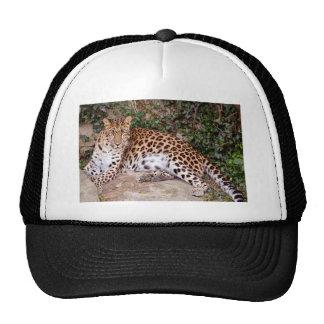 Leopardo que encontra-se na rocha bone