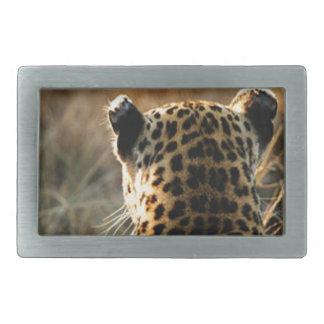 Leopardo que olha fora na distância