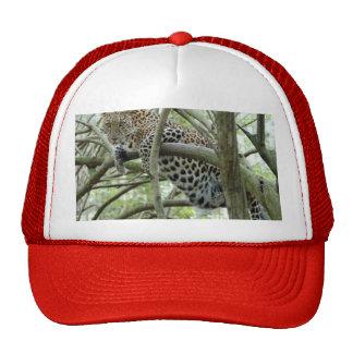 LeopardSundari_005 Boné
