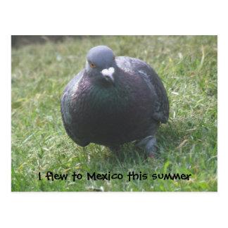 Levantando o cartão do costume do pombo