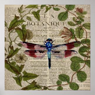 libélula botânica francesa do vintage da arte poster