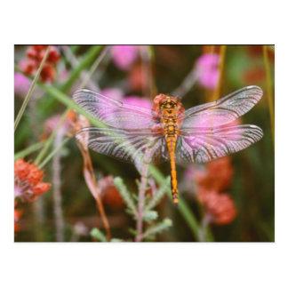Libélula cor-de-rosa no cartão das flores