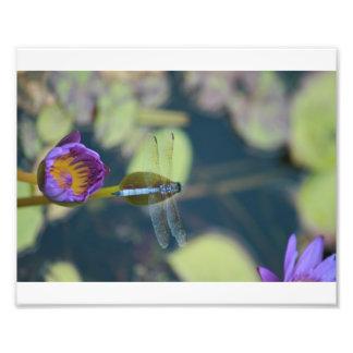 libélula impressão de foto