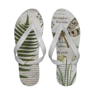 libélula moderna do francês do vintage sandalia rasteira