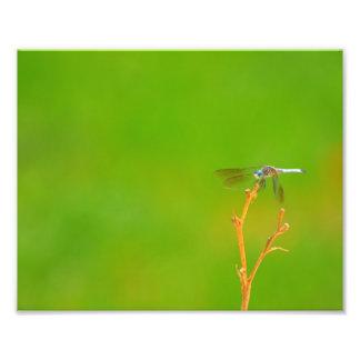 Libélula no verde arte de fotos