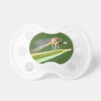 Libélula que come o mosquito chupeta