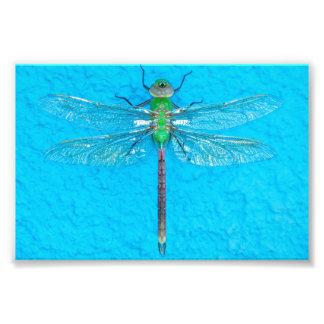 Libélula verde macro no fundo azul impressão de foto