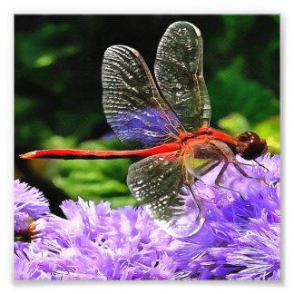 Libélula vermelha nas flores roxas violetas impressão de foto