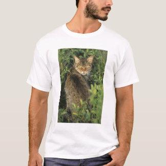 Libyca selvagem africano do gato, do Felis), Camiseta