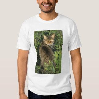 Libyca selvagem africano do gato, do Felis), T-shirts