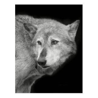 Líder copy.jpg do bloco de lobo cartão postal