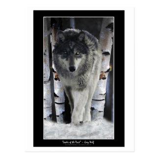 LÍDER dos cartão do lobo do ~ do BLOCO Cartoes Postais