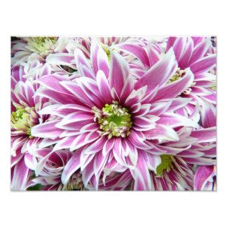 Lilac bonito e flor branca impressão de foto
