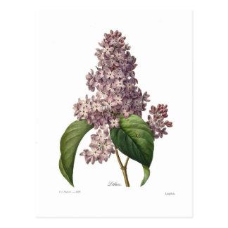 Lilac Cartão Postal