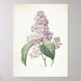 Lilac ou Lilas Pôster