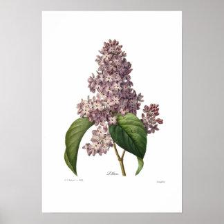 Lilac Pôster