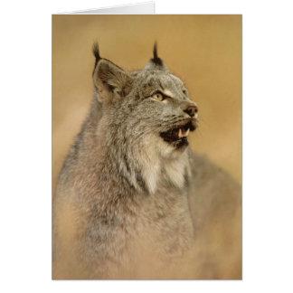 Lince de Canadá (canadensis) do lince - gatos Cartão Comemorativo