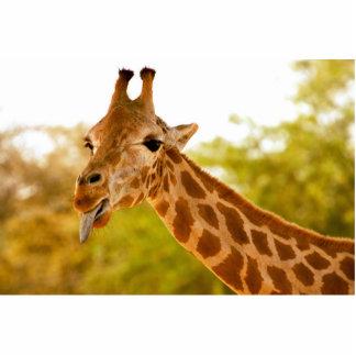 Língua do girafa escultura de foto