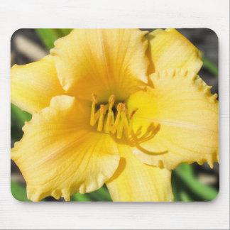 Lírio amarelo Mousepad floral