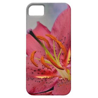 Lírio cor-de-rosa bonito capas para iPhone 5