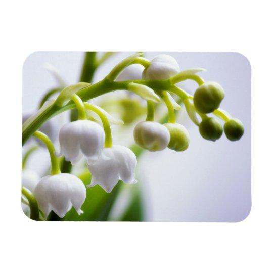 Lírio das flores do vale foto com ímã retangular