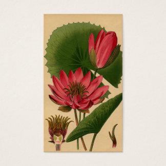 Lírio de água botânico Lotus do rosa do impressão Cartão De Visitas