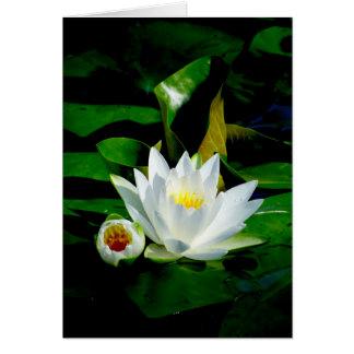 Lírio de água branca e botão perfeitos - perfeição cartão comemorativo