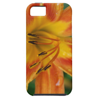 Lírio de tigre capa tough para iPhone 5