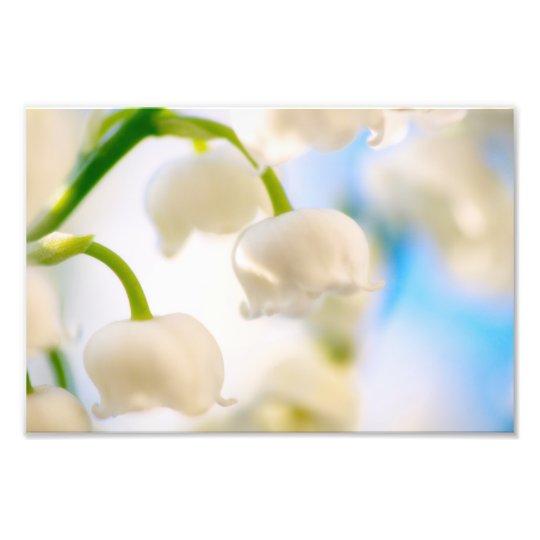 Lírio do Fim-acima da flor do vale Impressão De Foto