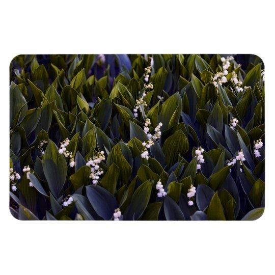 Lírio do remendo da flor do vale com matiz azul ímã