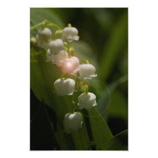 Lírio do vale floral impressão de foto